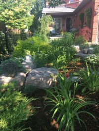 25+ best ideas about No grass landscaping on Pinterest ...