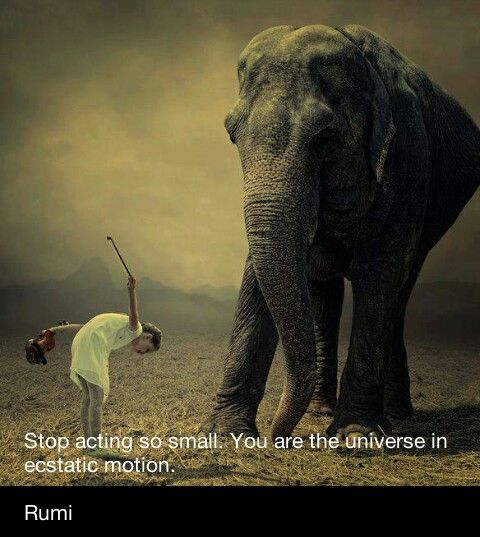 Impossible Quote Wallpaper Elephant Rumi Wise Quote Elephants The Only Animals Who