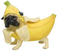 25+ best ideas about Pugs in costume on Pinterest