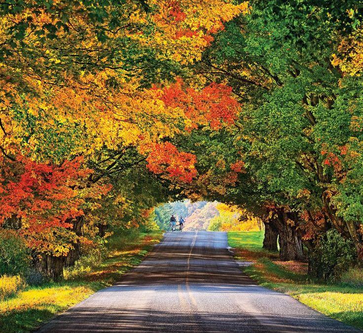 Pure Michigan Fall Wallpaper Conrad Road Tunnel Of Trees Ludington Area Not Sure How