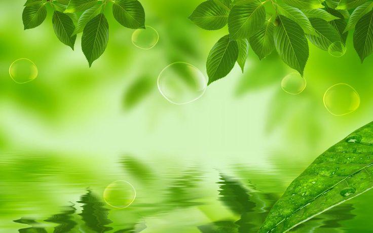 Raindrops Falling On Flowers Wallpaper 7771 Natural Green Leaf Hd Wallpaper Jpg 1680 215 1050