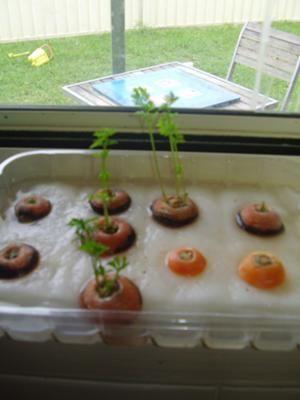 78+ Ideas About Growing Carrots On Pinterest | Garden Planning