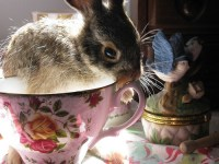 19 best bunnies in cups images on Pinterest | Bunnies ...