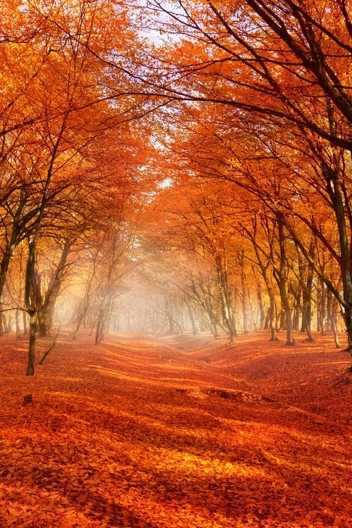 Autumn Falling Leaves Live Wallpaper 25 Best Ideas About Autumn Forest On Pinterest Fall