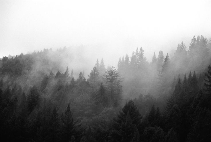 Black and white forest tumblr google search for a