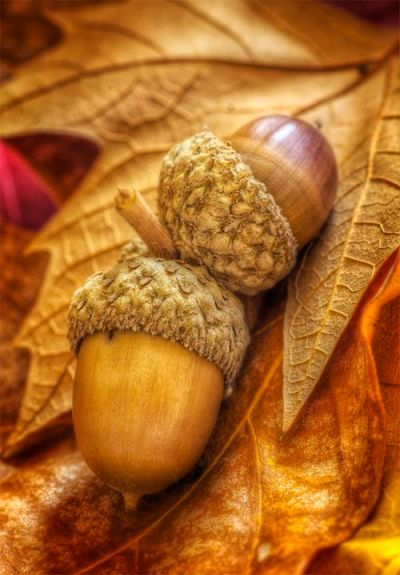 1000+ ideas about Fall Backgrounds Iphone on Pinterest   Fall Wallpaper, iPhone wallpapers and ...