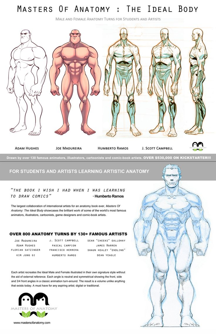 Reference Works Reference Work Wikipedia Bookonecover Masters Of Anatomy Alimayo Arangos