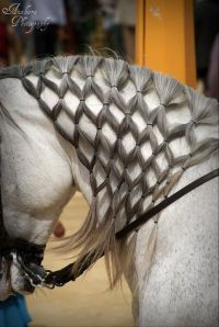 Mane Braiding | Horse hair styles | Pinterest | Braids ...