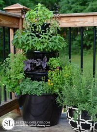 1000+ ideas about Patio Herb Gardens on Pinterest | Herbs ...