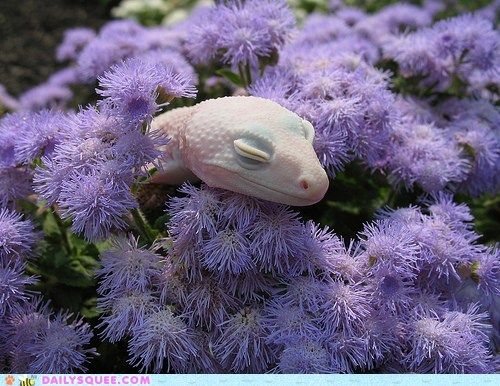 Cute Leopard Gecko Wallpaper What Is This Fancy See Through Lizard Look You Can See