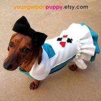 Alice in Wonderland Dress Dog Costume | Girlfriends ...