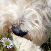 17 Best images about Furry Friends on Pinterest | Sheep ...