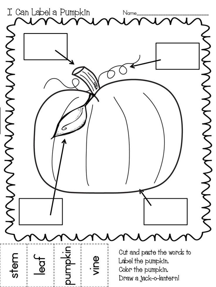 parts of a pumpkin pumpkin study pinterest
