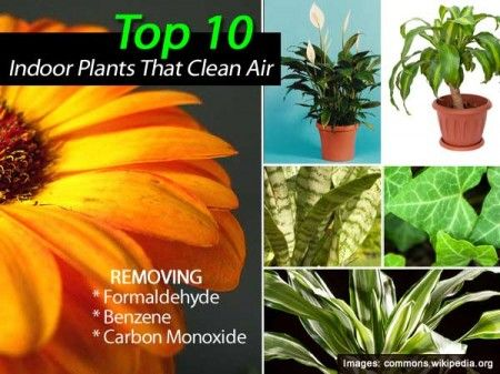 1000+ Images About Top Indoor Clean Air Plants On Pinterest