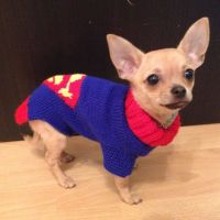 25+ best ideas about Chihuahua Clothes on Pinterest | Dog ...