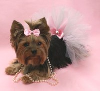 1000+ images about Yorkie Clothes on Pinterest | Pet ...