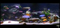 Malawi cichlids - interesting rock layout | Aquarium ...
