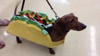 Weiner Dog Costumes Pictures to Pin on Pinterest