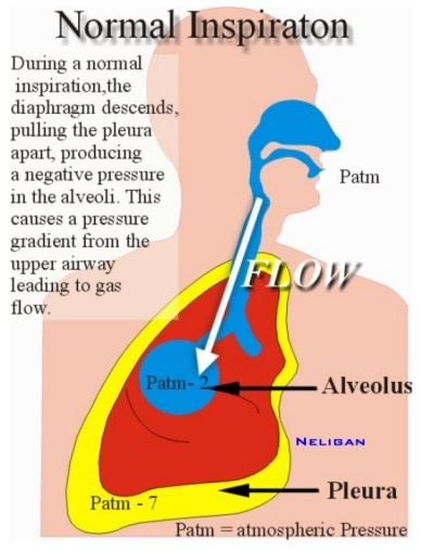 Nasal High Flow Therapy With Optiflow Bcrtca 98 Best Images About Inhale Exhale Repeat On Pinterest