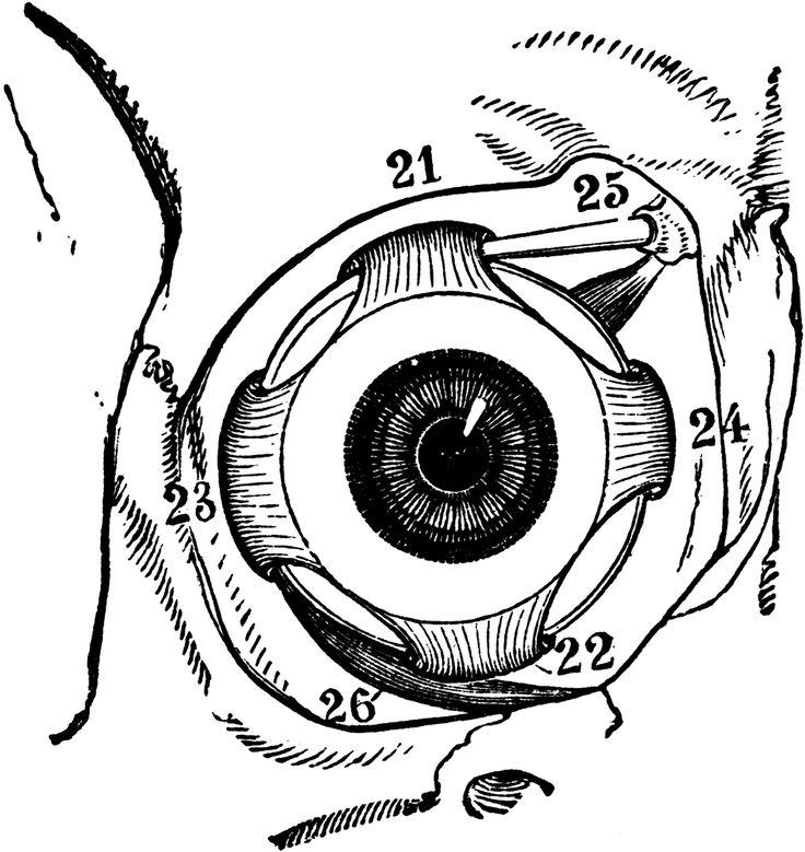 night blindness symptoms diagram