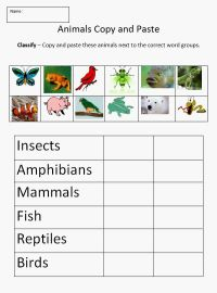 25+ best ideas about Animal classification on Pinterest ...