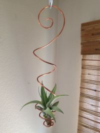Best 25+ Hanging air plants ideas only on Pinterest ...