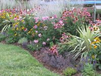 echinacea, russian sage phlox, rudbeckia | My Outside ...