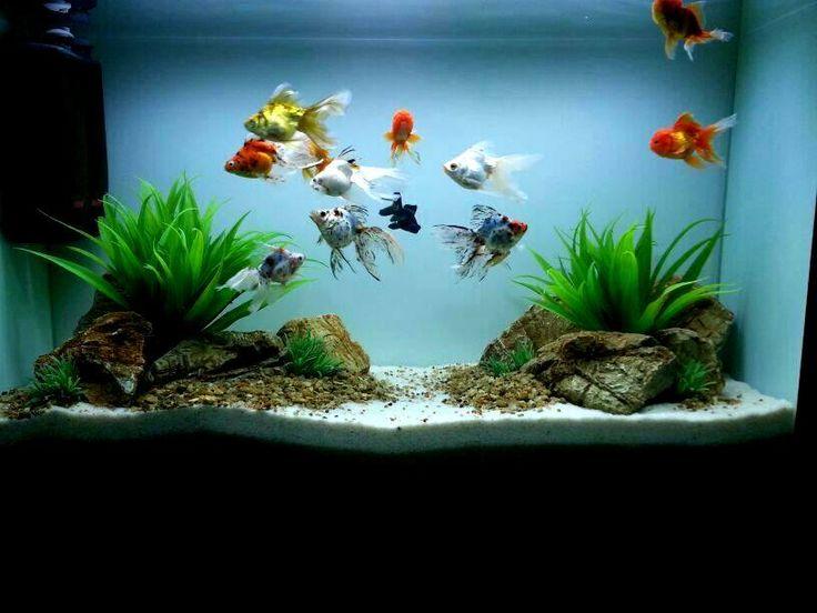 25+ best ideas about Aquarium design on Pinterest