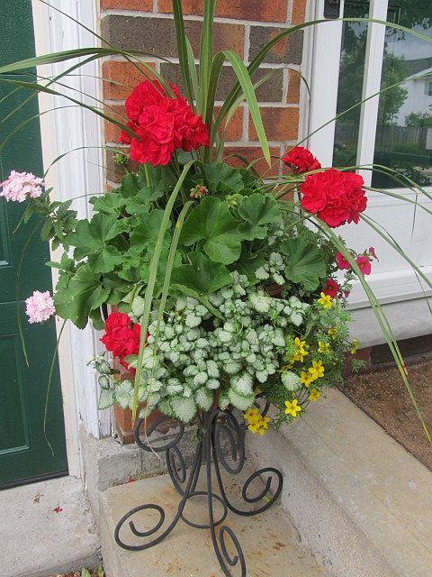 17 best ideas about front door plants on pinterest