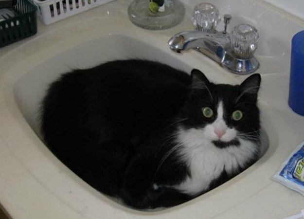 1000 Images About Cats In The Sink On Pinterest