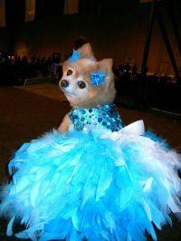 Dog Dress, Wedding, Turquoise Bling Satin Feather Harness ...