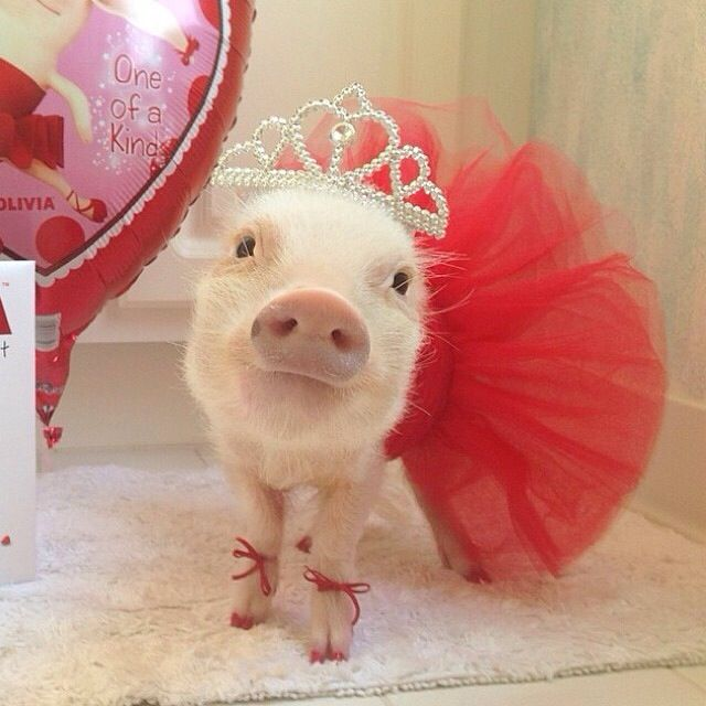 Cute Piggies Wallpaper 17 Best Images About Pig On Pinterest Eating Ice Cream
