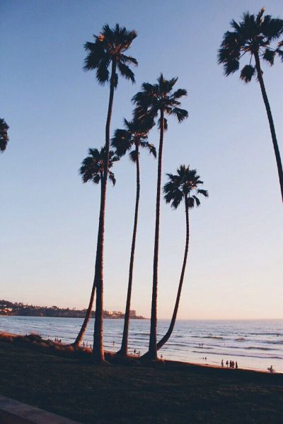 Palm trees sunset iphone wallpaper | Iphone wallpapers | Pinterest | iPhone wallpapers, Trees ...
