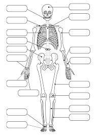 fish skeleton diagram