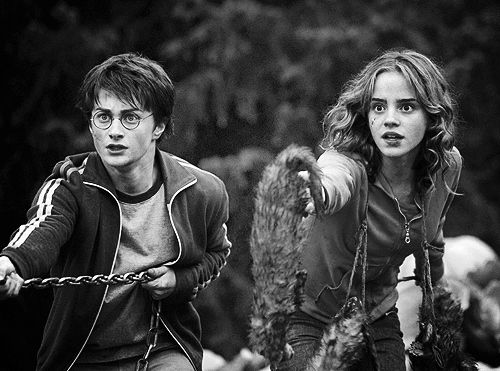 Ferret Wallpaper Iphone 17 Best Images About Harry And Hermione On Pinterest