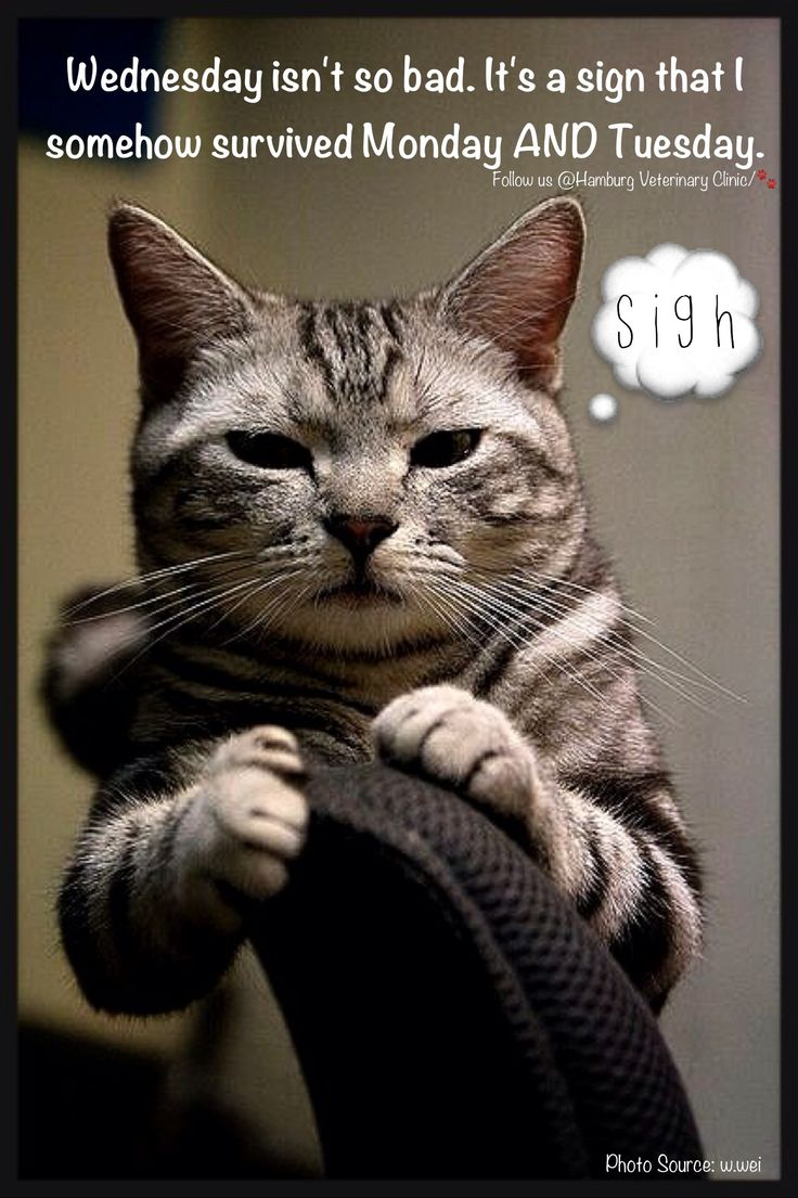 Wallpaper So Freakin Cute Cats 1000 Images About Wednesday Humor On Pinterest