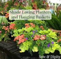 Shade plants for planters and baskets, finally ...