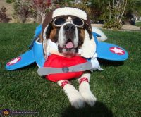 1000+ ideas about Funny Dog Halloween Costumes on ...