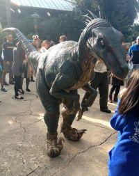raptor halloween costume dog