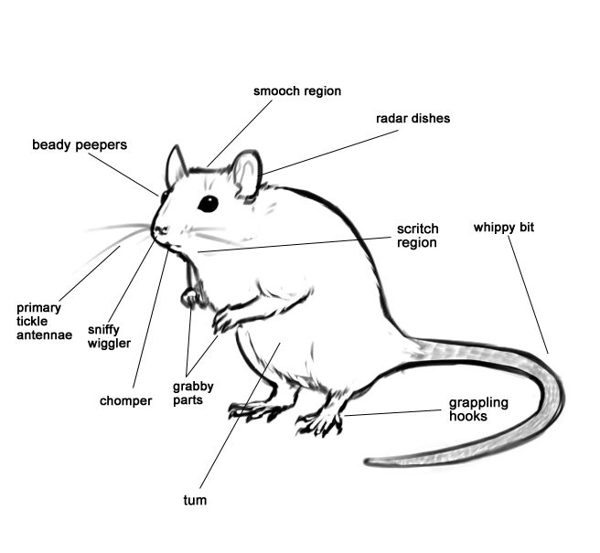 well labelledputer mouse diagram