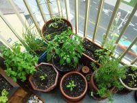 25+ best Container vegetable gardening ideas on Pinterest ...