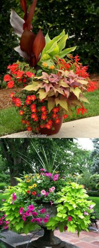 17 Best ideas about Potted Plants on Pinterest