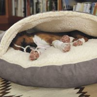 1000+ ideas about Dog Cave on Pinterest | Cave Dog Bed ...