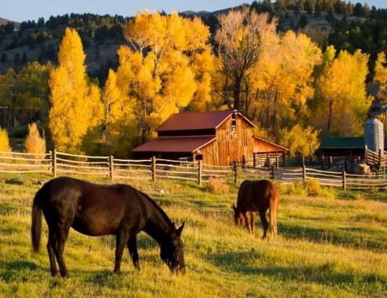 Fall Scenes Wallpaper With Pumpkins Beautiful Fall Scene Colorful Trees Barn And Horses