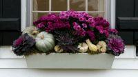 Best 25+ Fall window boxes ideas on Pinterest