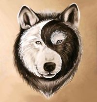 1000+ ideas about Wolf Face Drawing on Pinterest | Wolf ...