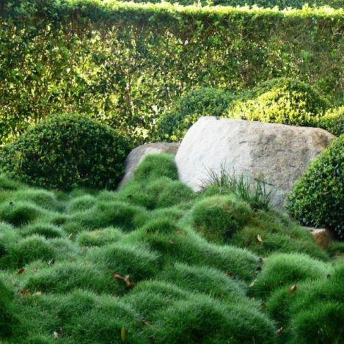 mow free grass