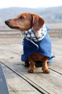 Best 25+ Dachshund clothes ideas on Pinterest