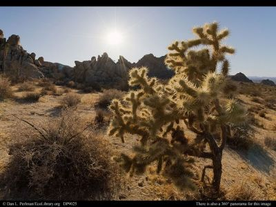 mojave desert - Google Search | DESERT LIFE | Pinterest | Trees, 14 and Cas