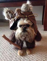 Best 25+ Ewok dog costume ideas on Pinterest